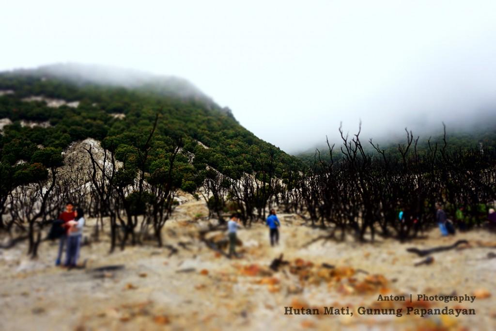 Hutan Mati Gunung Papandayan